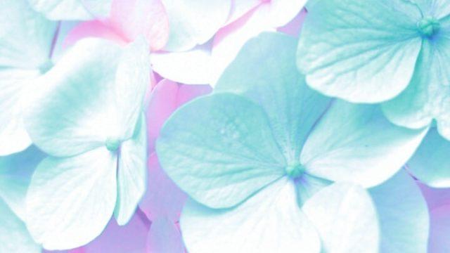 あじさいの花びらの画像
