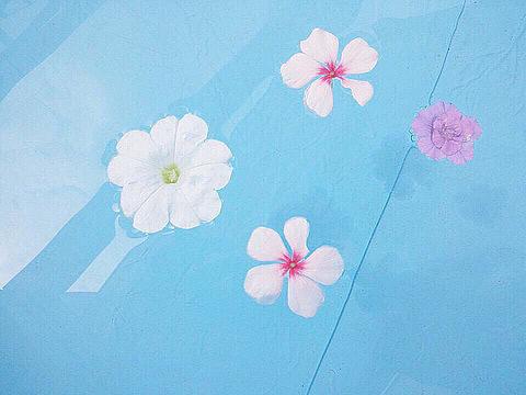 水辺に花びら画像