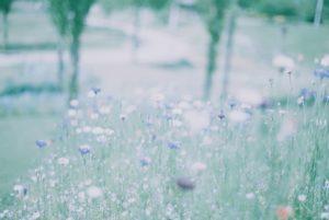 お花畑の画像
