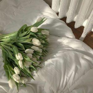 白いお花の画像